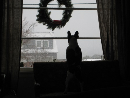 bruno-watching-snowstorm